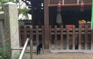 漢國神社内を歩く黒猫2
