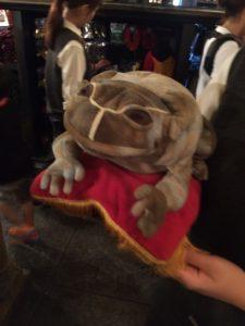 フロッグクワイアのカエル