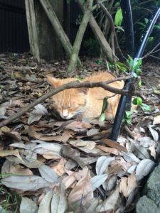 伊勢のおはらい町付近の猫