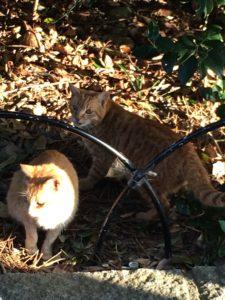 伊勢のおはらい町付近の2匹の猫