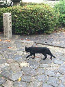 漢國神社内を歩く黒猫