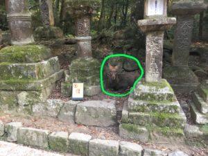 背景に隠れた鹿の居場所を示す画像