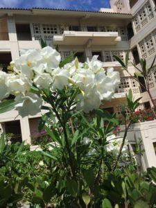 ザ・ブセナテラスの白い花