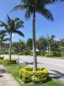 ザ・ブセナテラスの道路とヤシの木