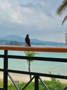 ザ・ブセナテラスのカフェテラス「ラ・ティーダ」のテラス席の手すりに止まった鳥
