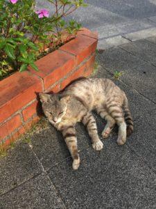 那覇市の猫1