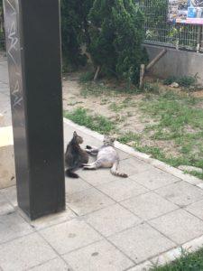 那覇市の猫2