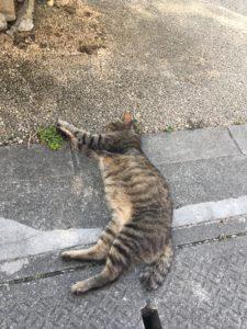 波上宮の近くにいた猫1