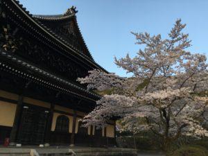 南禅寺の桜1
