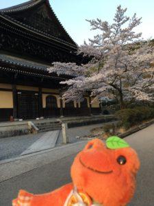 南禅寺の桜2