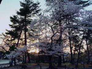 南禅寺の桜3