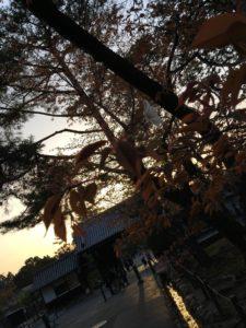 南禅寺の夕焼け1