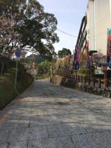 桜の抄の前の道