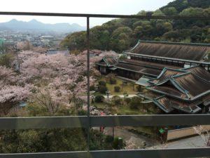 桜の抄の近くの桜の木