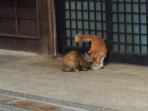 屋島寺の猫