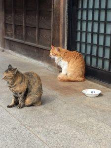 屋島寺の猫3