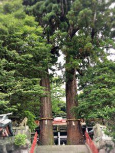 八幡朝見神社の大木