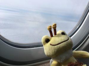 飛行機の窓とカエル