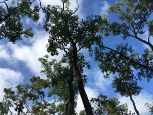 木々と青い空