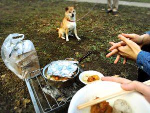 野菜煮込みと犬
