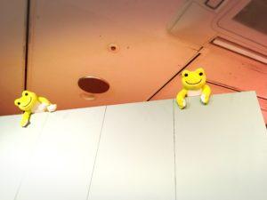 天井付近のピクルスたち