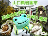 【山口県】岩國白蛇神社と白崎八幡宮にお参り!国指定・天然記念物シロヘビの御利益!銭亀かえる石像もあるよ!
