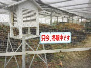 岩國白蛇神社のシロヘビ冬眠中の看板