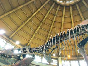 ディスカバリーレストラン内部の恐竜の骨